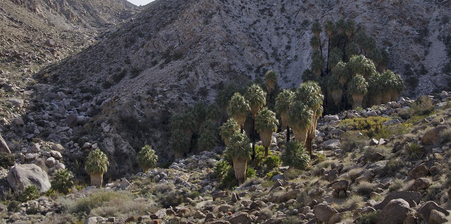 Fortynine Palms Oasis Joshua Tree NP 23.jpg