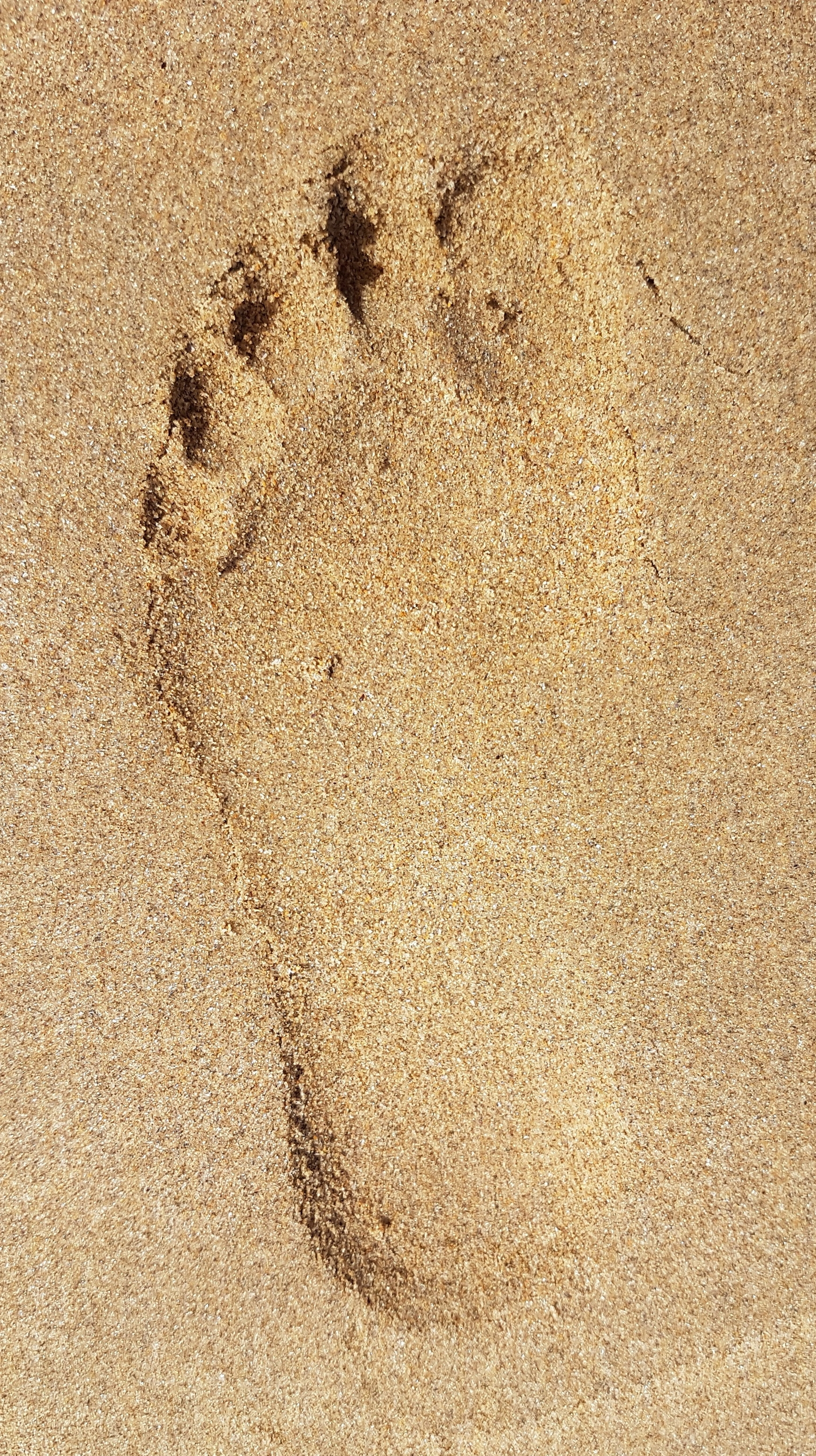 I went to the beach - and I saw footprints.