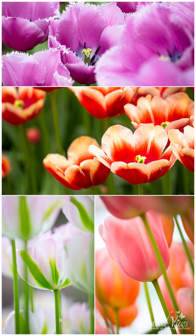 Blog-Collage-1393963848684.jpg
