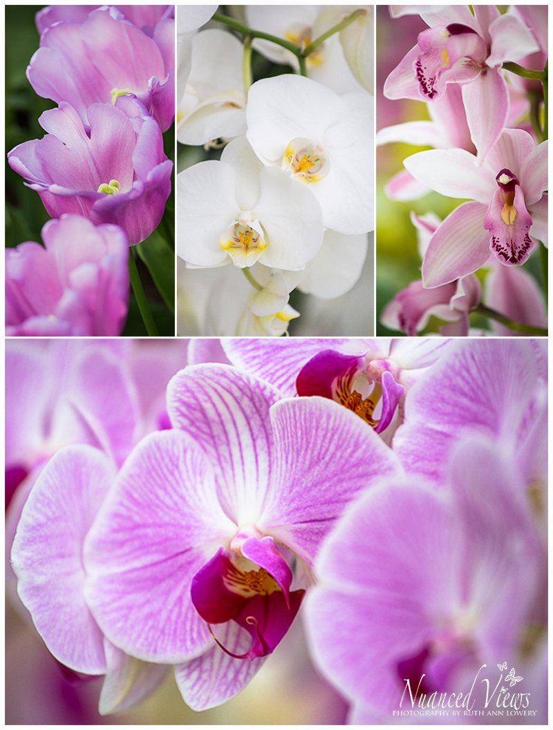 Blog-Collage-1393963923828.jpg