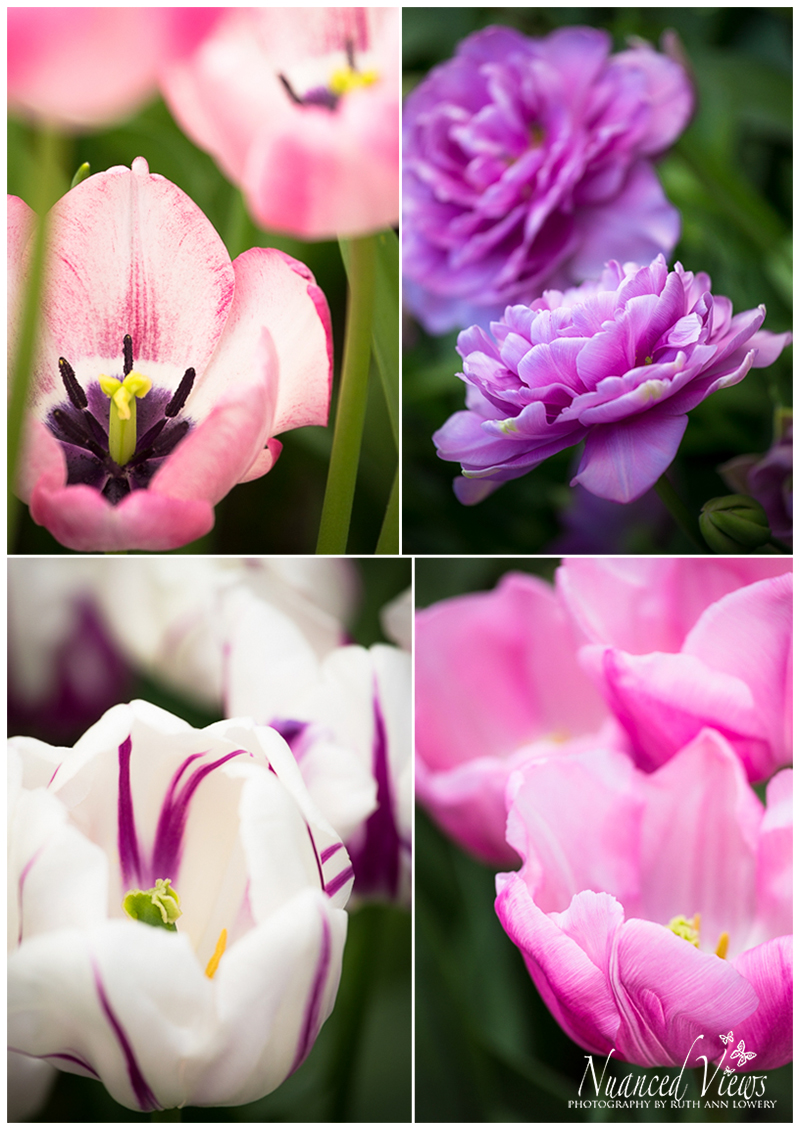 Blog-Collage-1393963733441.jpg