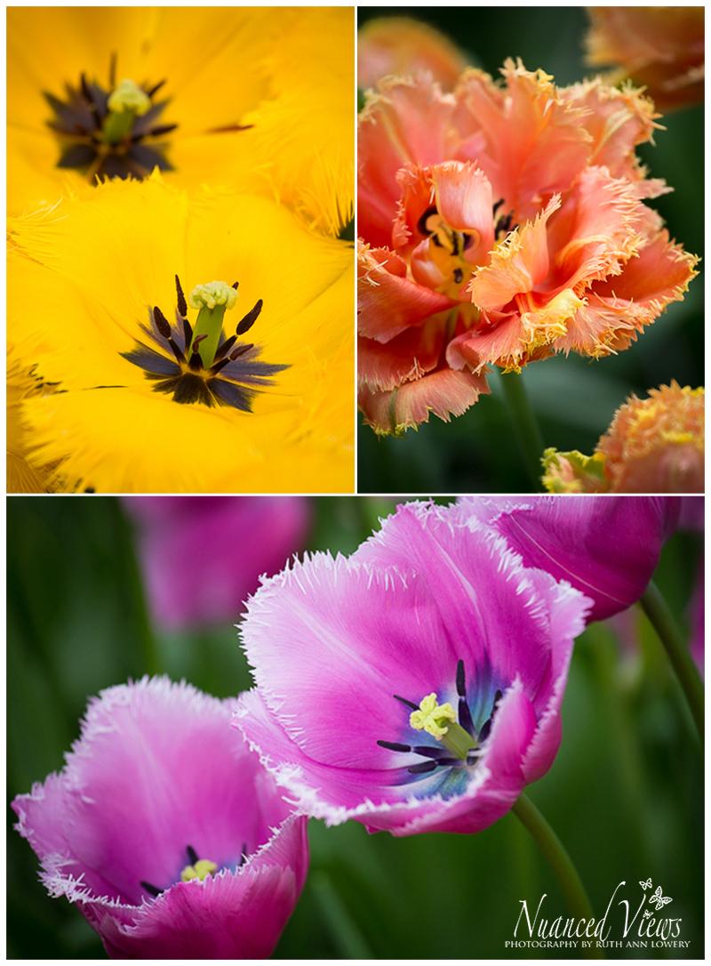Blog-Collage-1393963394395.jpg