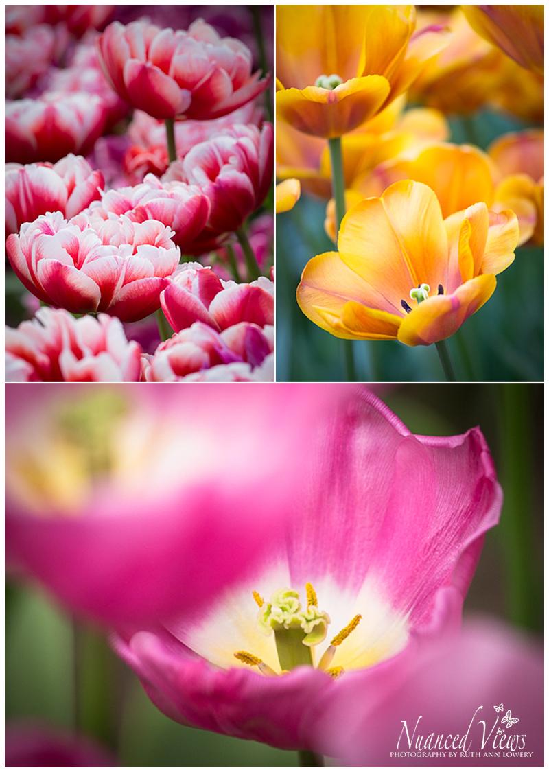Blog-Collage-1393963658204.jpg