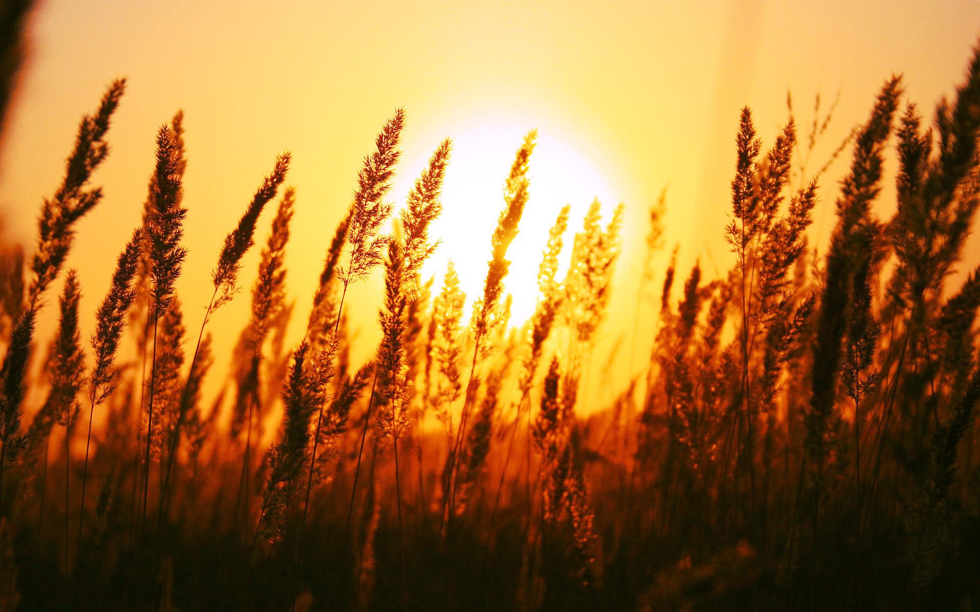 Beautiful-Sunrise.jpg