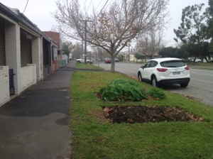 Little veggie patch 200 meters away on Richardson st. Albert Park