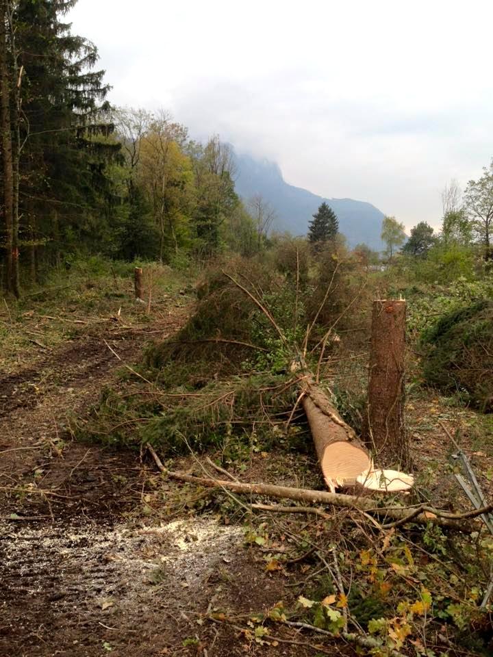 Forêt coupée pour faire place à la route