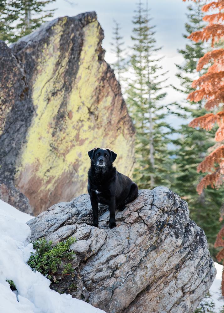 Dog Model: Rufus