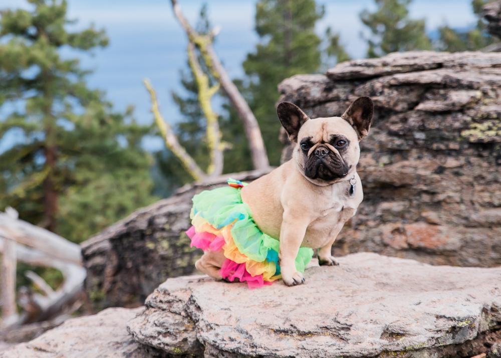 Dog Model & Ballerina: Janis