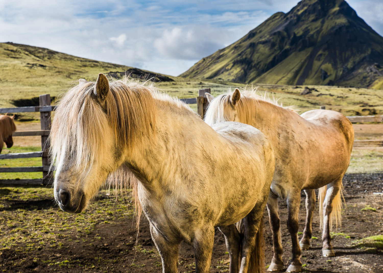 IcelandFavs6_KelliPricePhotography_Iceland_September2018.jpg