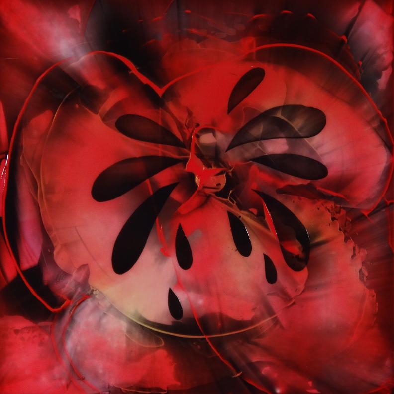 Poppy Burst 1