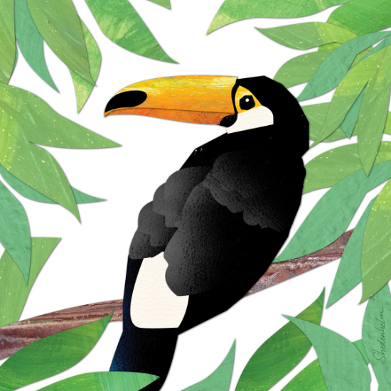 Kendra Shedenhelm_Toucan_Illustration Friday_Collage_Illustration