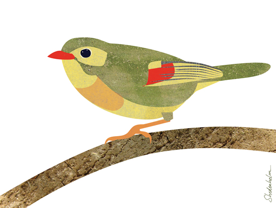 Kendra Shedenhelm_Pekin Robin_Collage_Illustration