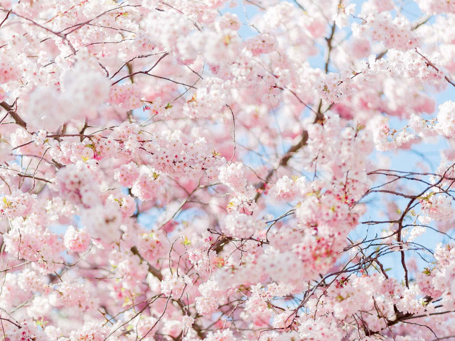 printemps-10.jpg