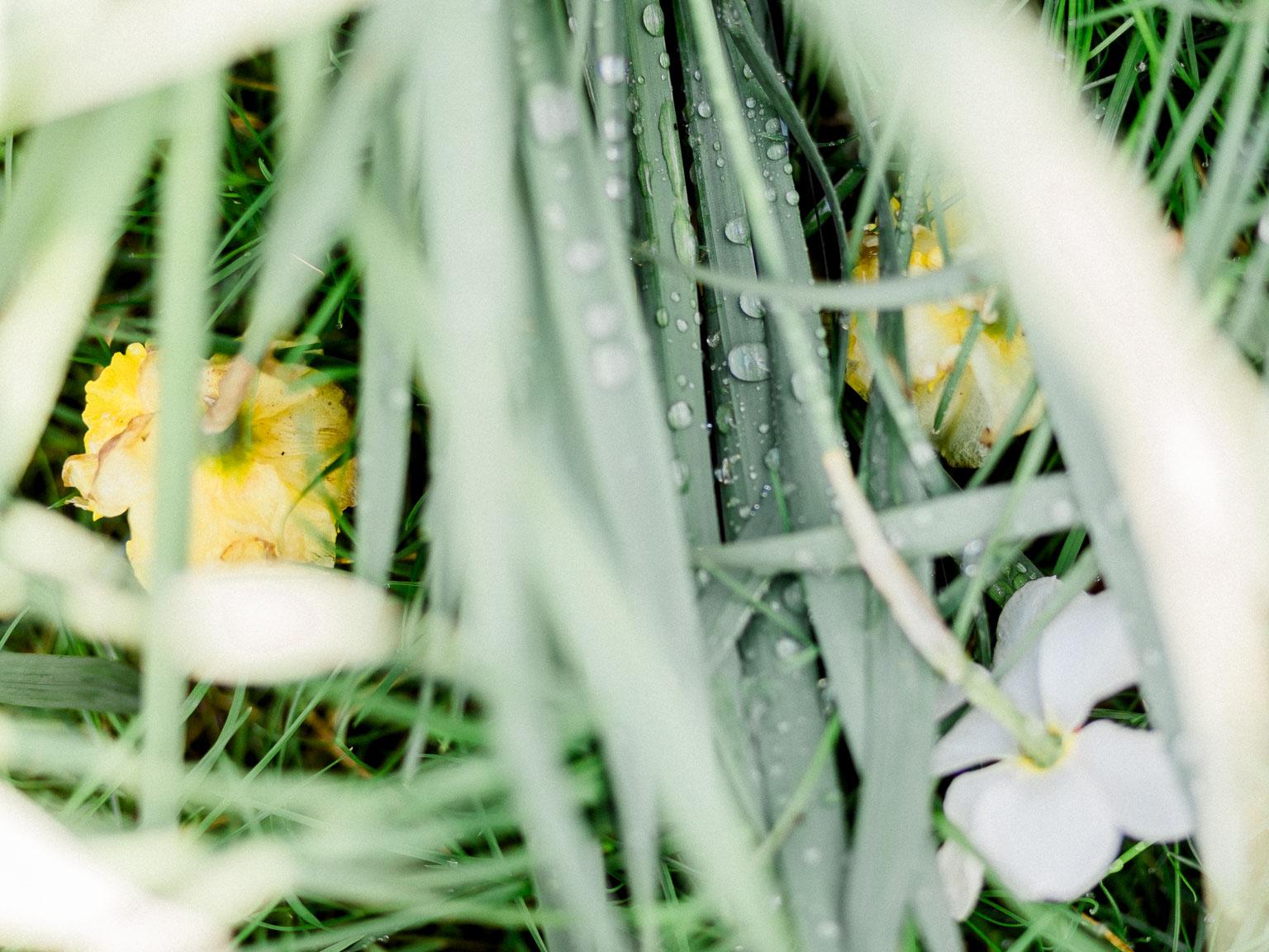 printemps-5.jpg