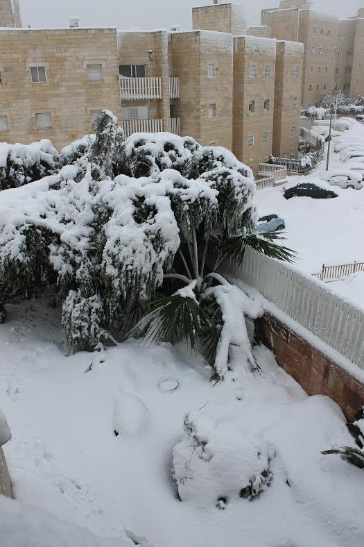 Israel Snow 2.jpg