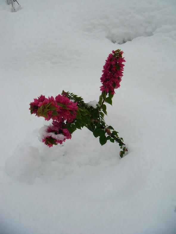 Israel Snow 1.jpg