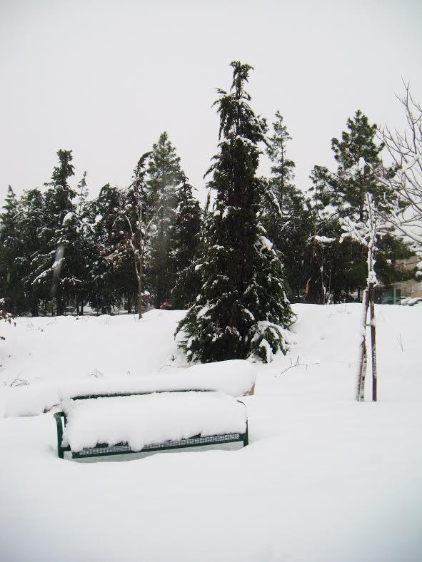Israel snow 6.jpg