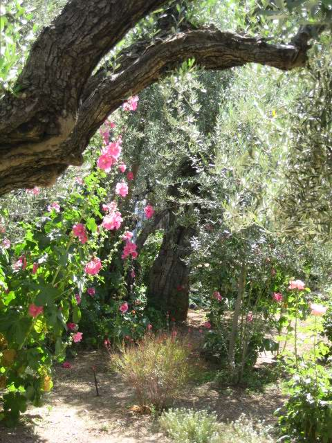 Beautiful Garden of Gethsemane