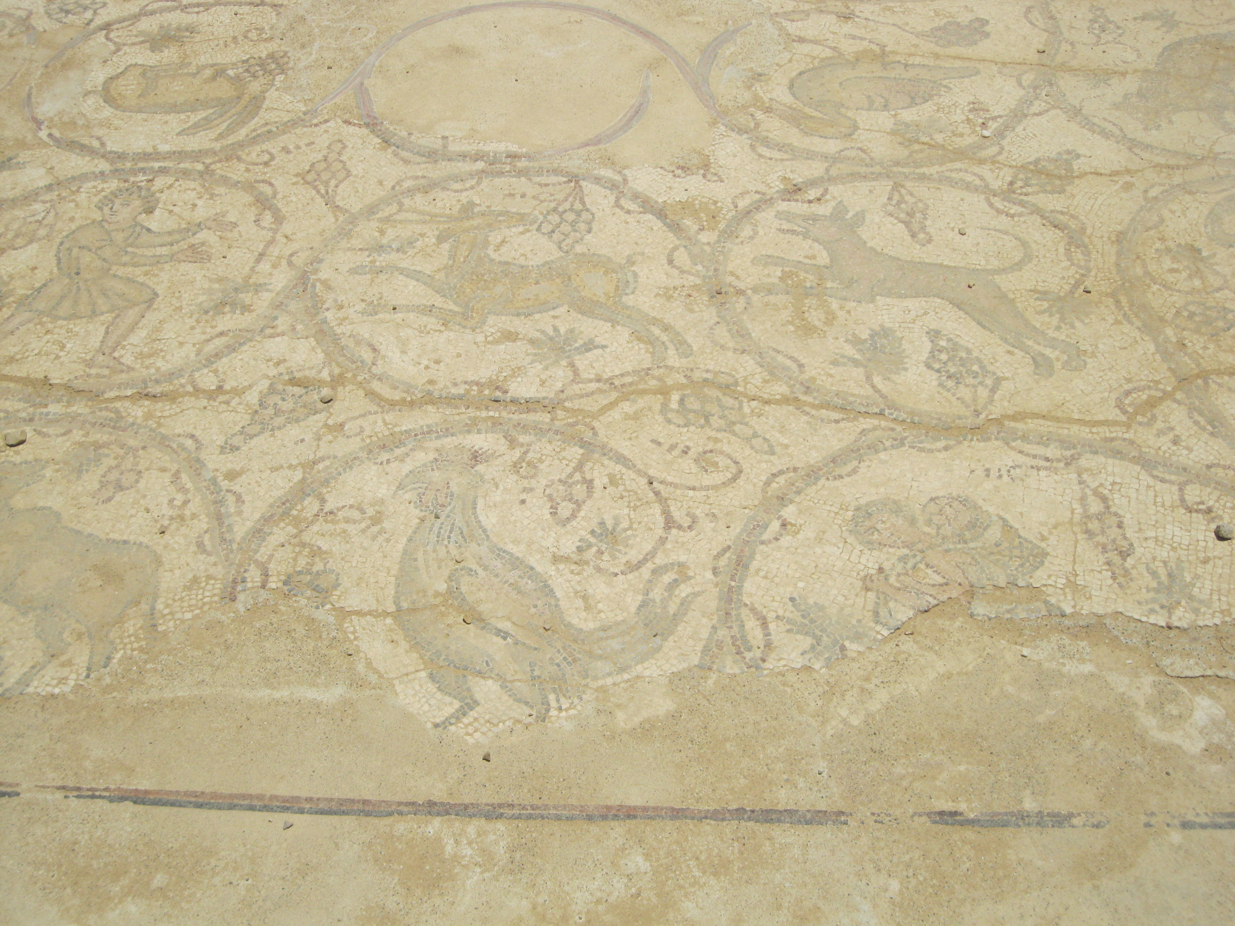 Beautiful mosaics have been so well preserved. (Caesarea by the Sea)
