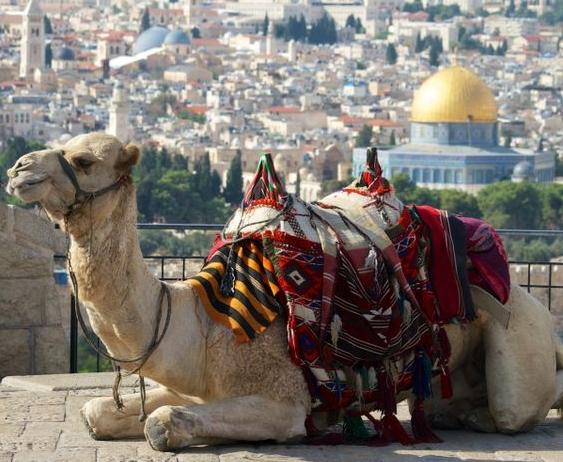 Camel in the Old City, Jerusalem