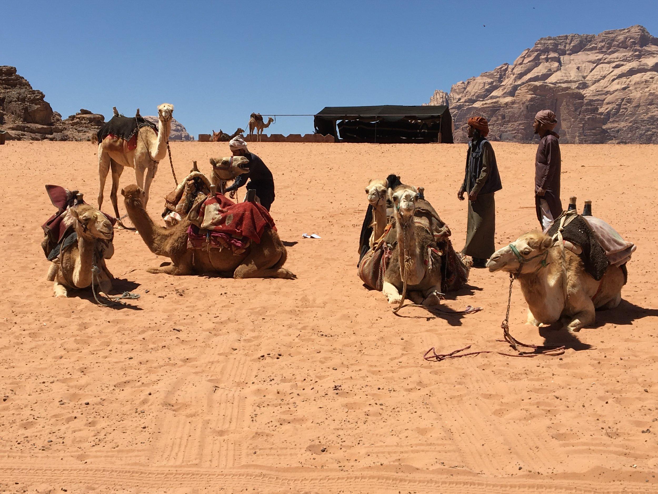 DSCN0239zd Camels and Bedoins only.JPG