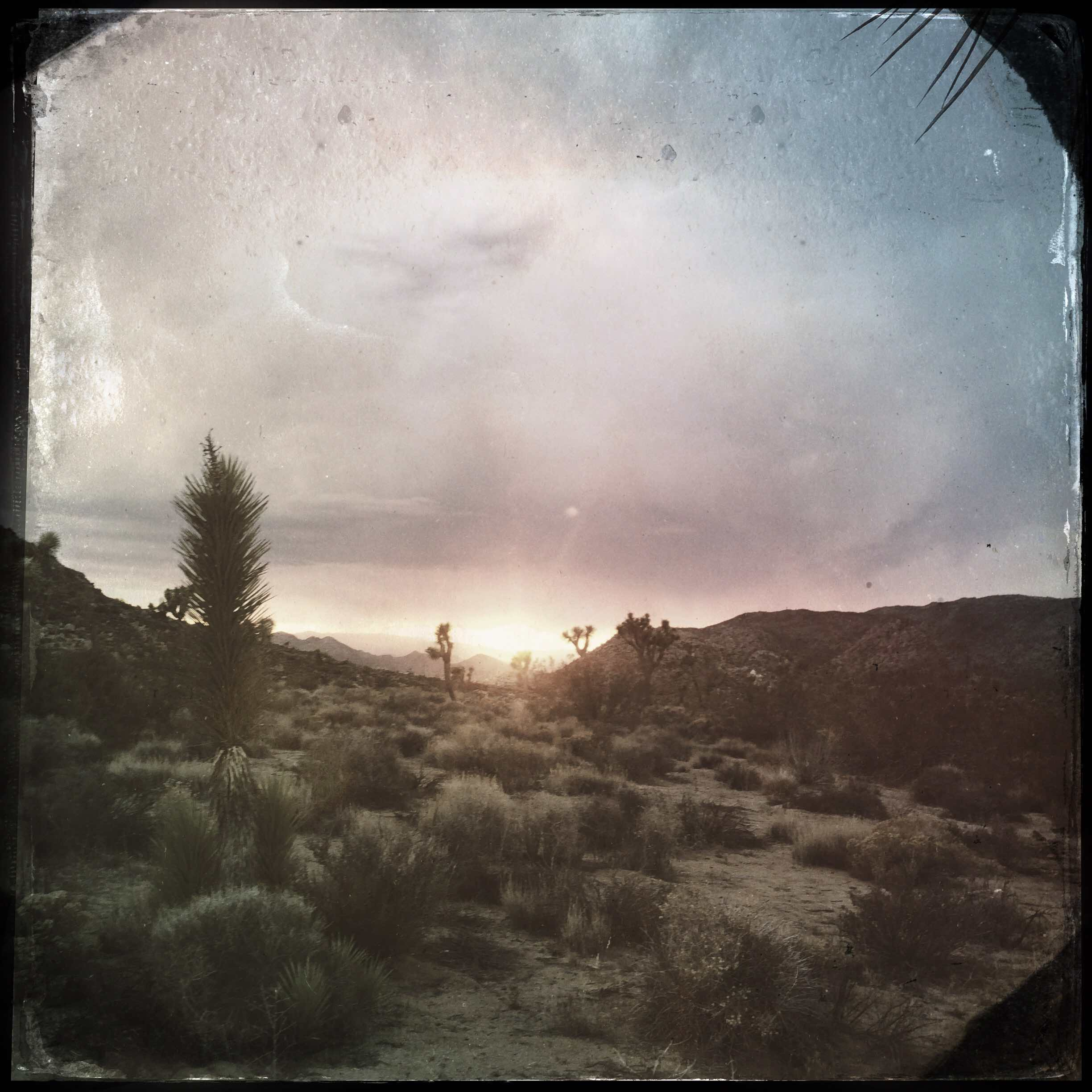 Upper Yucca Valley  Photograph,   13 June, 2015;  Copyright © Tennyson Woodbridge, 1963 to present. All appropriation rights reserved