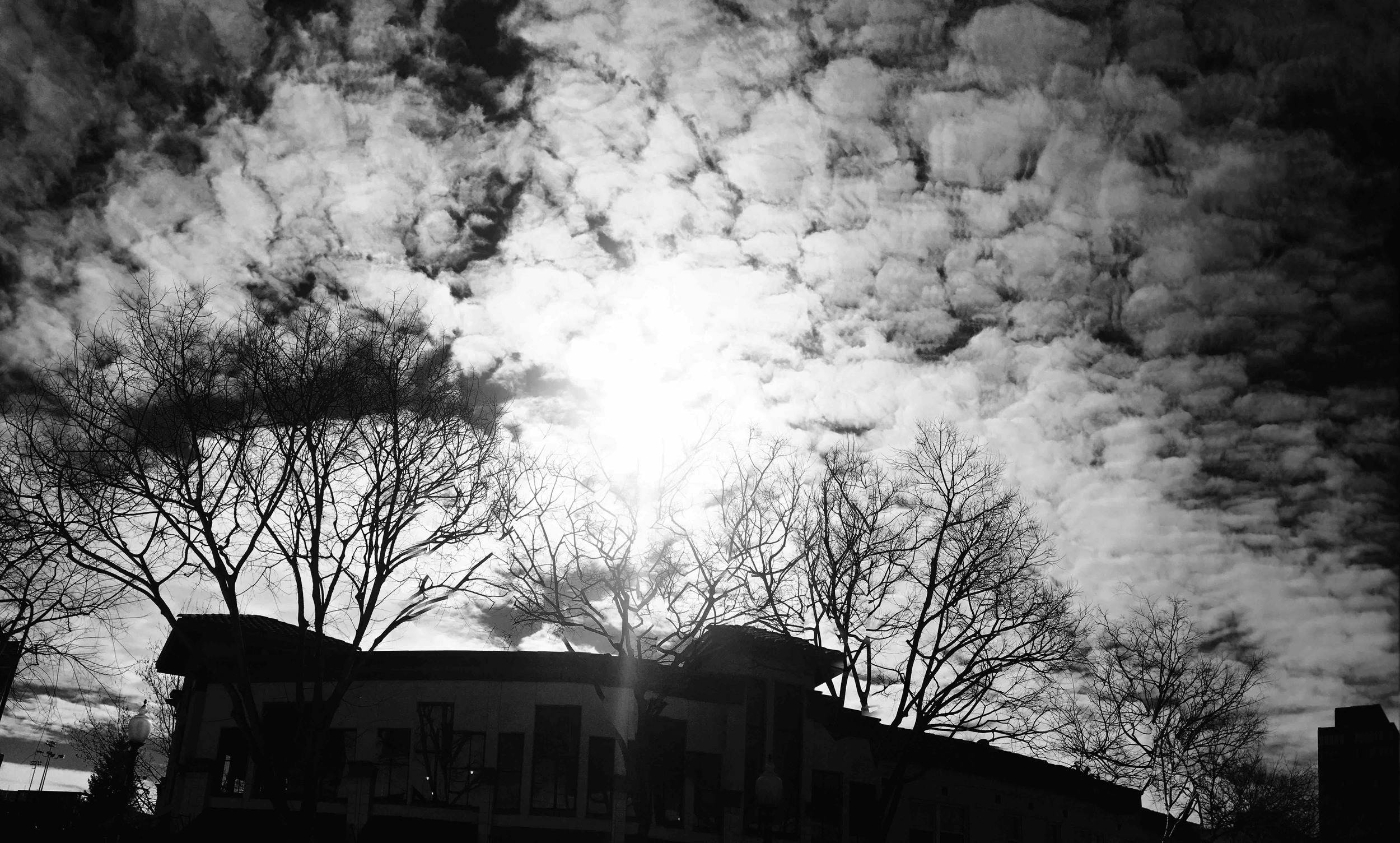 Berkeley Pan_4  Photograph, 30 January, 2016;  Copyright © Tennyson Woodbridge, 1963 to present