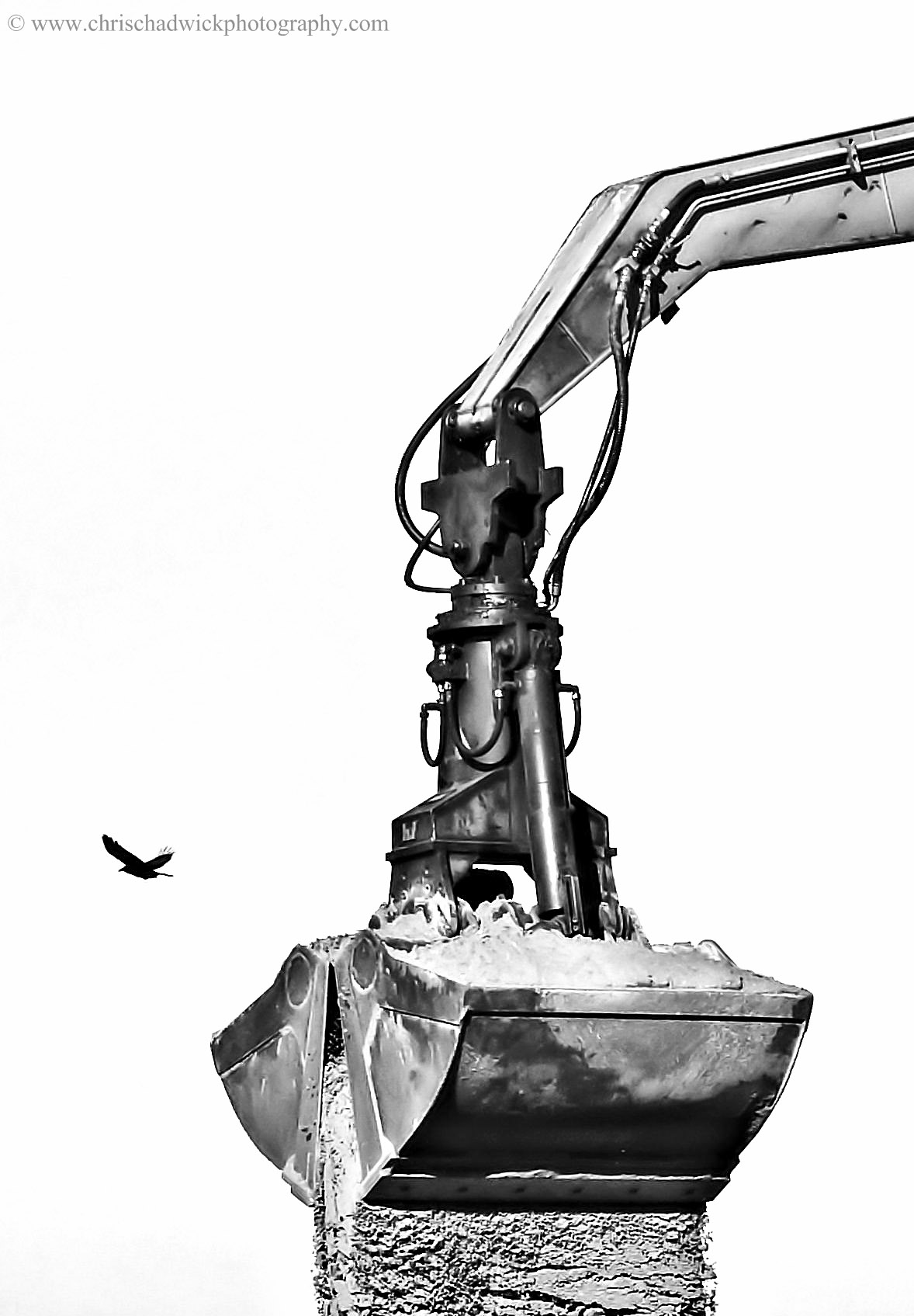 Crow and Crane