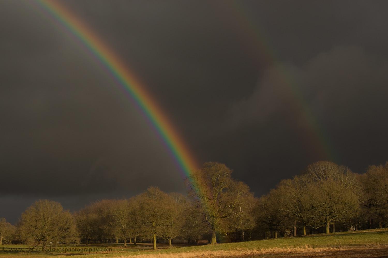 Rainbows in Richmond Park.jpg