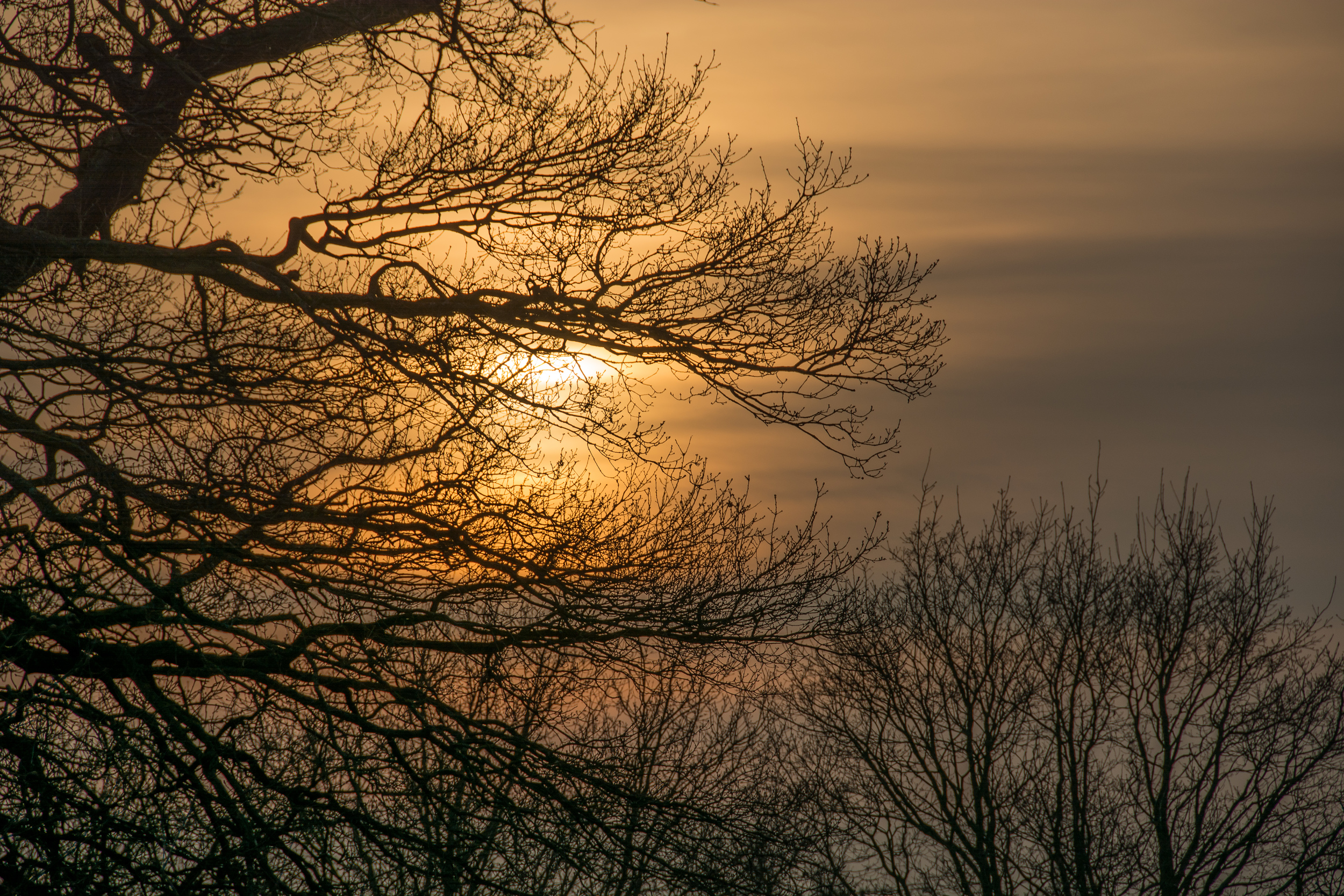 Bare Branches in the Sunrise
