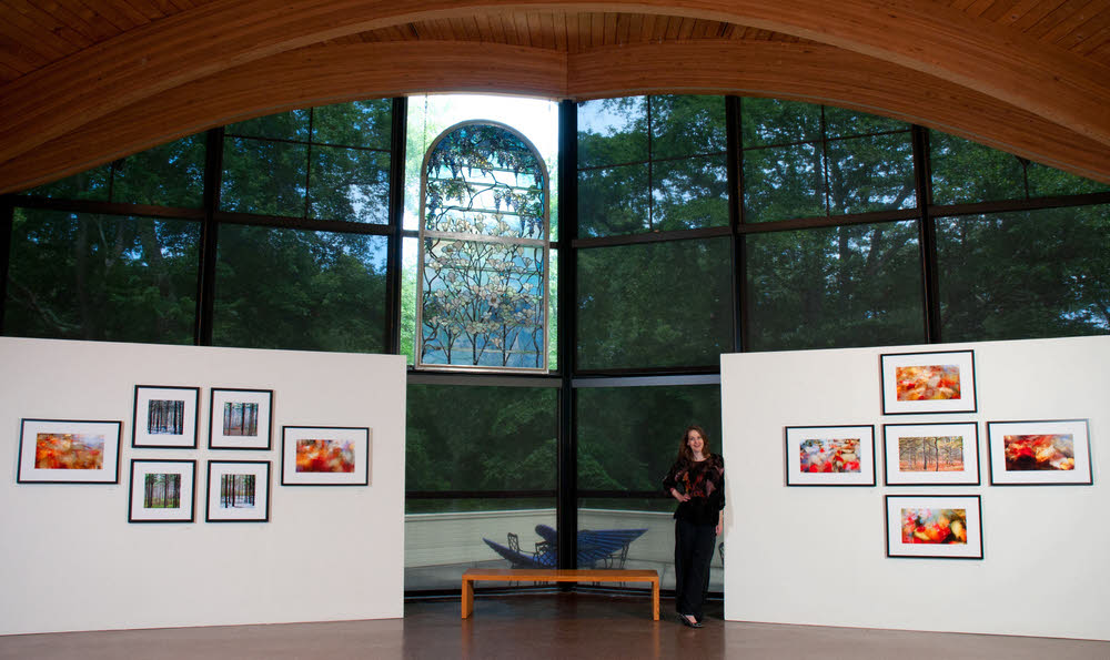 The Art Complex Museum,  Untamed Forest  (center wall view),  Photo Credit: Paul Camello