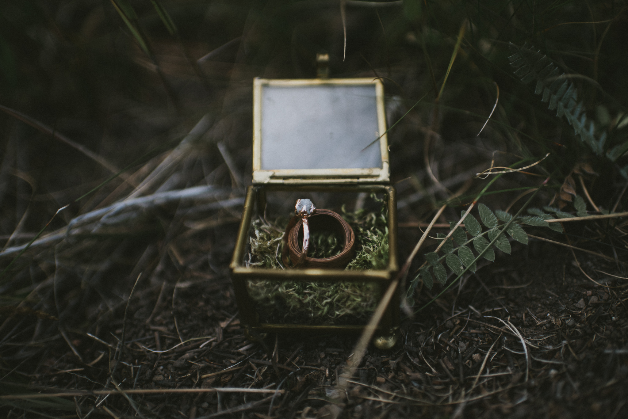 wedding engagement ring glass box forest kananaskis