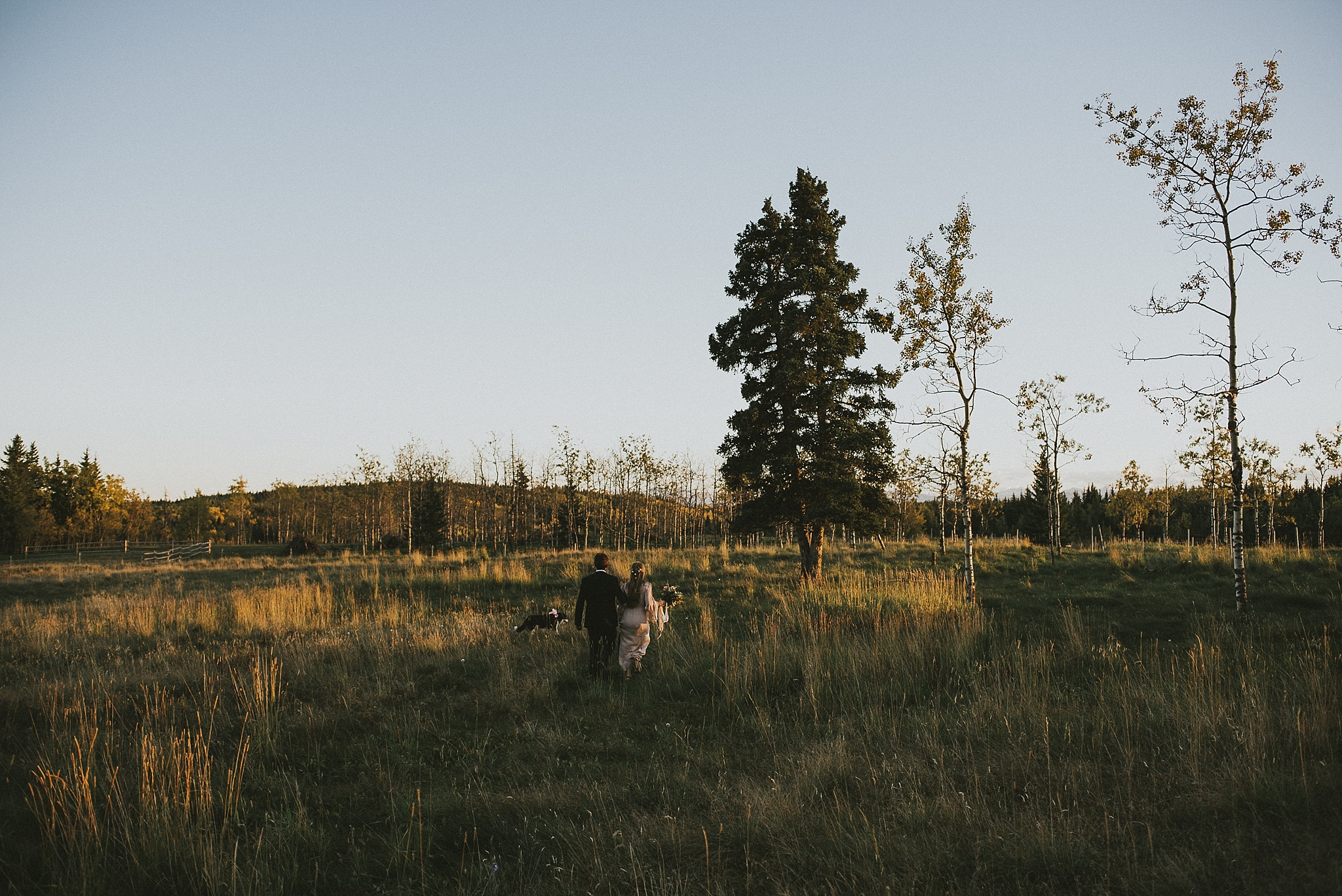 couple dog portrait field sunset kananaskis elopement