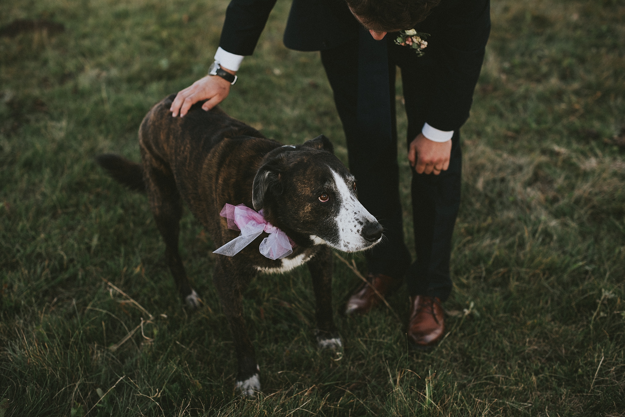 groom pet dog portrait kananaskis elopement