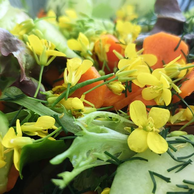 Farmer's Market Salad 🌼
