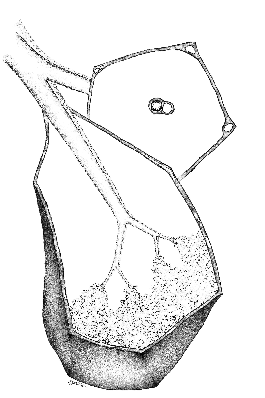 SL 1.jpg