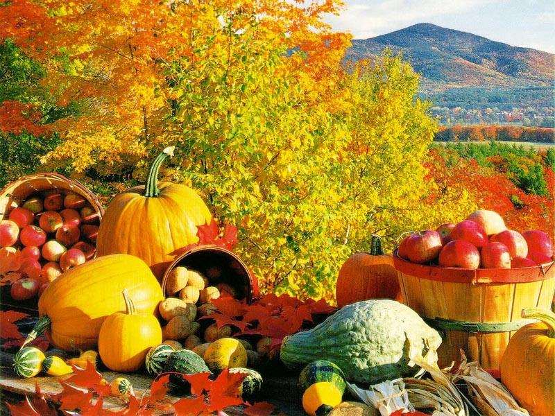 TST-fall-harvest.jpg