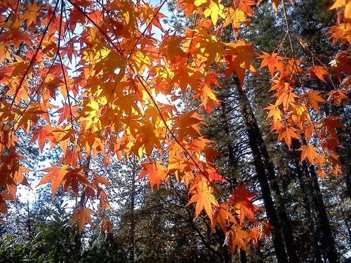 TST_Fall_Leaves_2.jpg