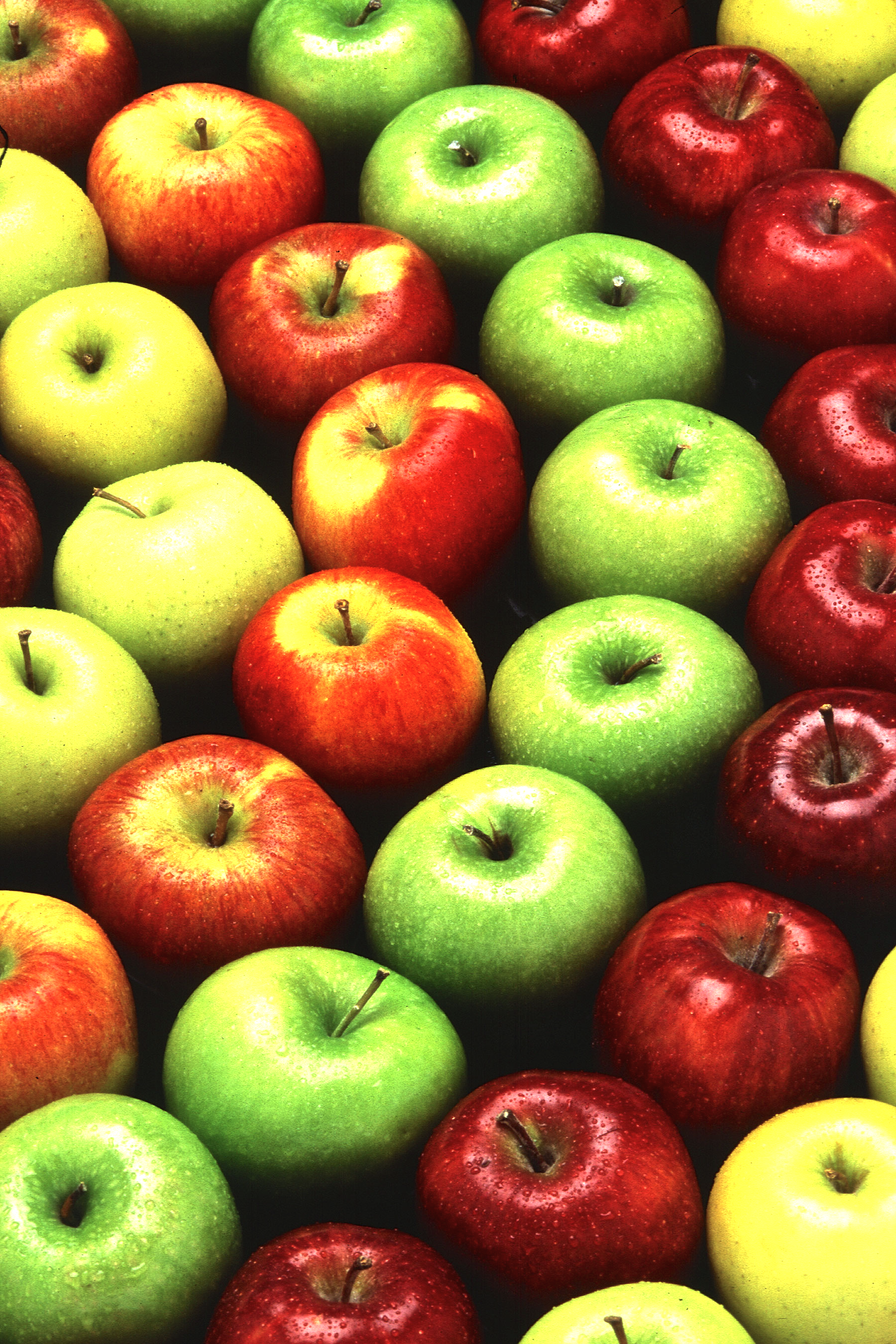 apples-1.png