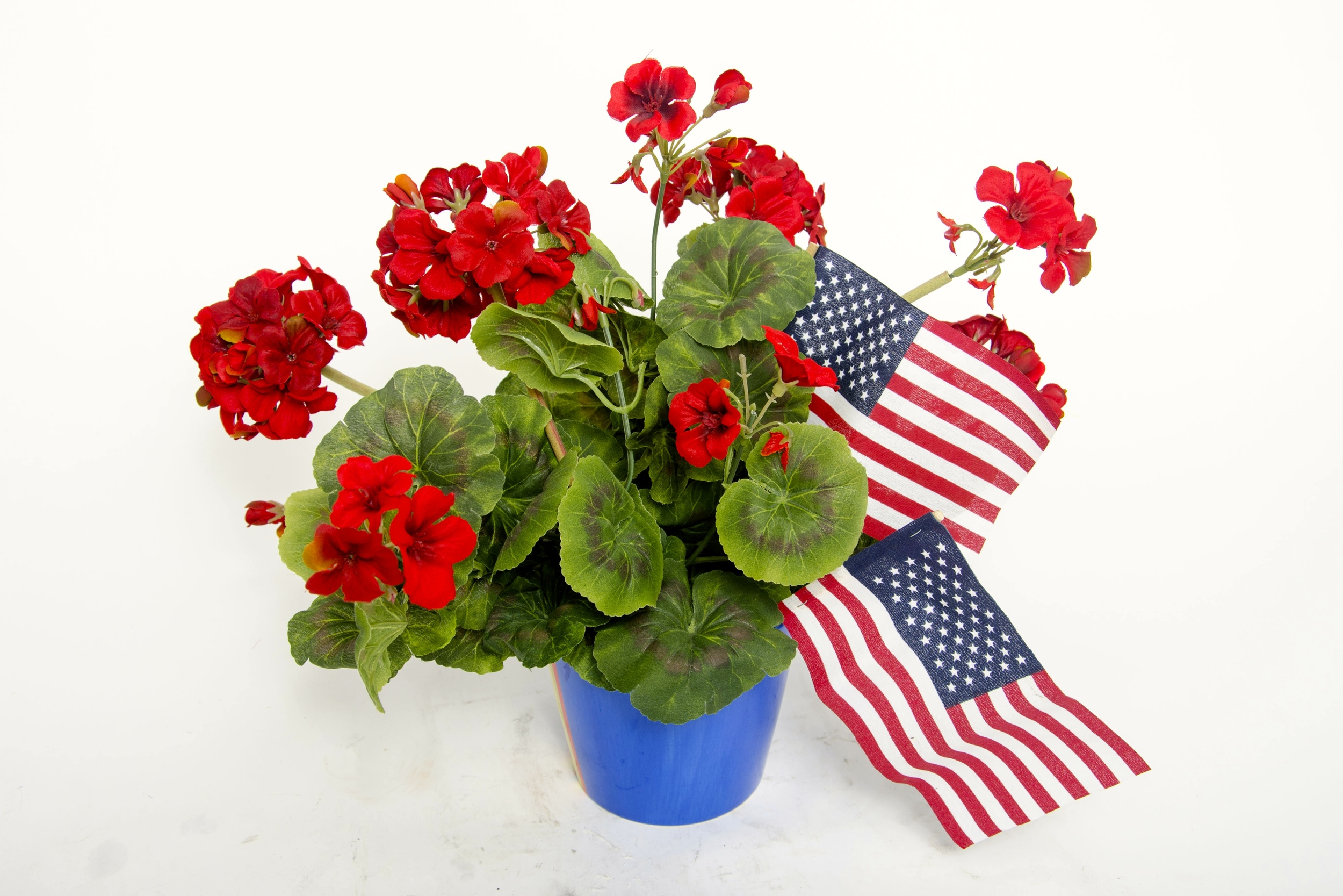 4th of July Geraniums