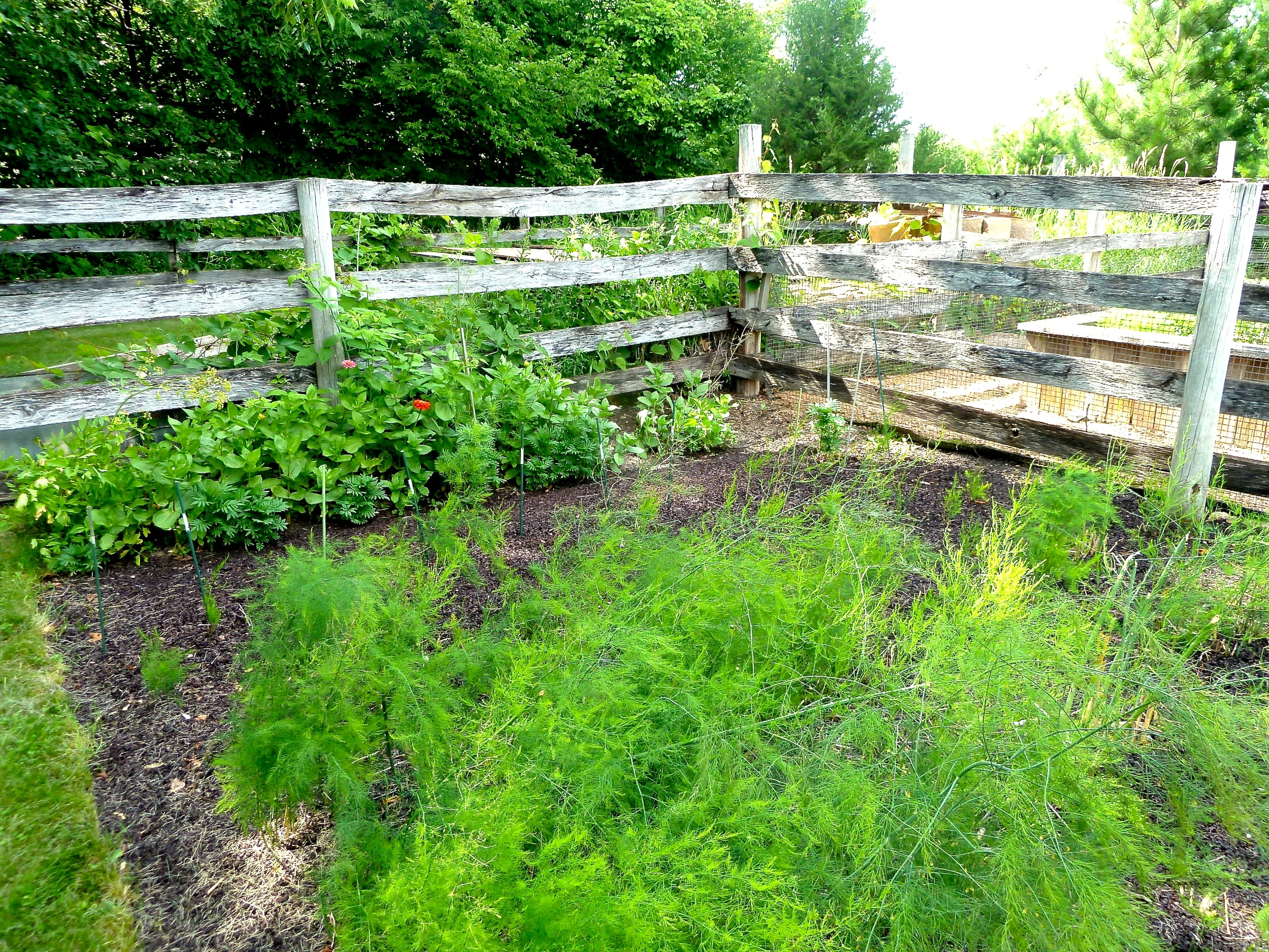Raised Beds Of....