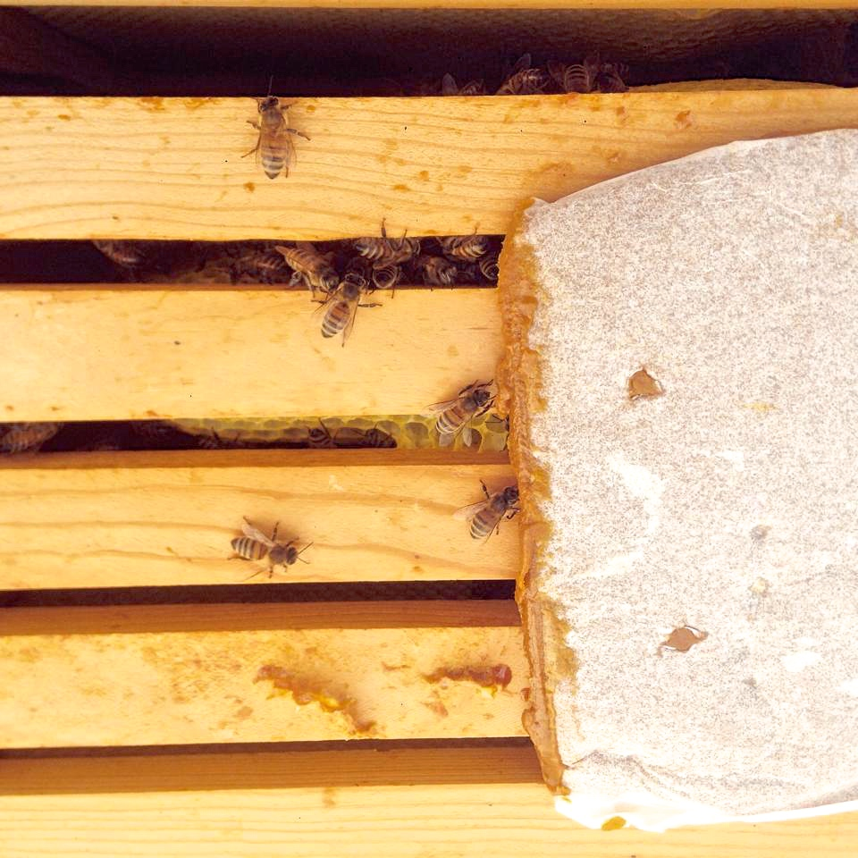 In this photo of the hive, I have placed apollen patty on top of the frames for the bees to eat;before the natural pollen sources were available this Spring.