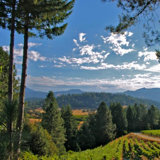 spellestate_wines_thanksgiving_pinotnoir_spiritedtable_photo.4.jpg