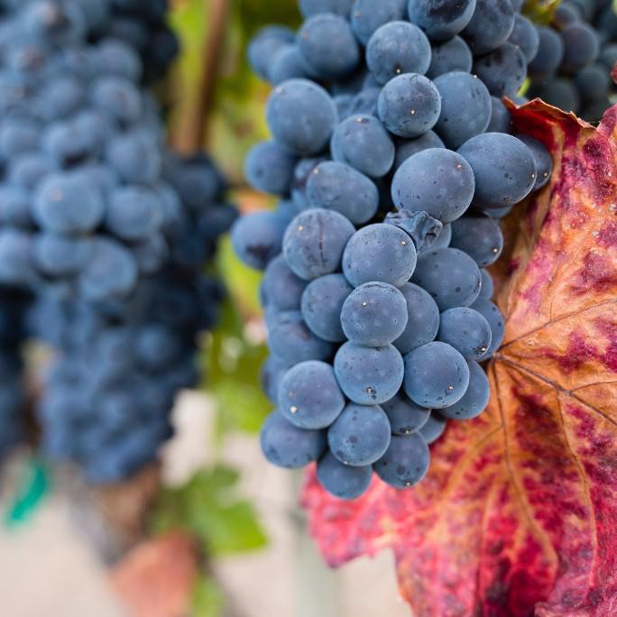 spellestate_wines_thanksgiving_pinotnoir_spiritedtable_photo.6.jpg