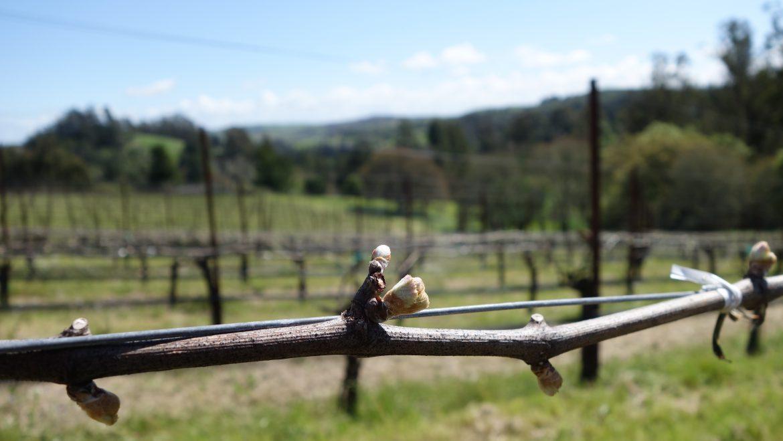 California Grapevine reviews the 2014 Spell Pinot Noirs  By Allisun