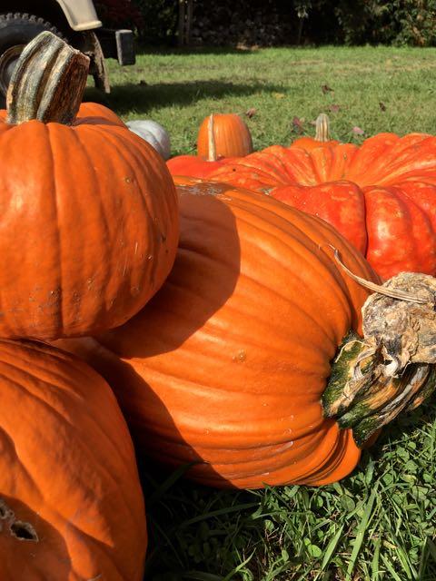 Zehorit_pumpkin_spiritedtable_photo3.jpg
