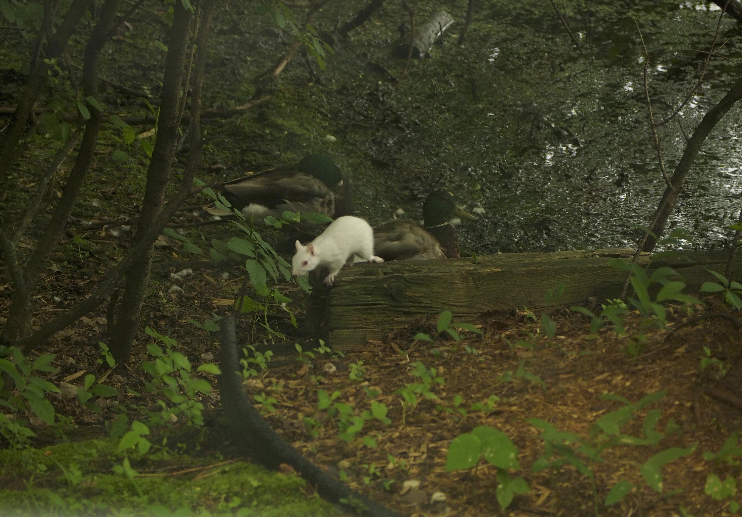 cindi_albino_squirrel_spiritedtable_photo3.jpg