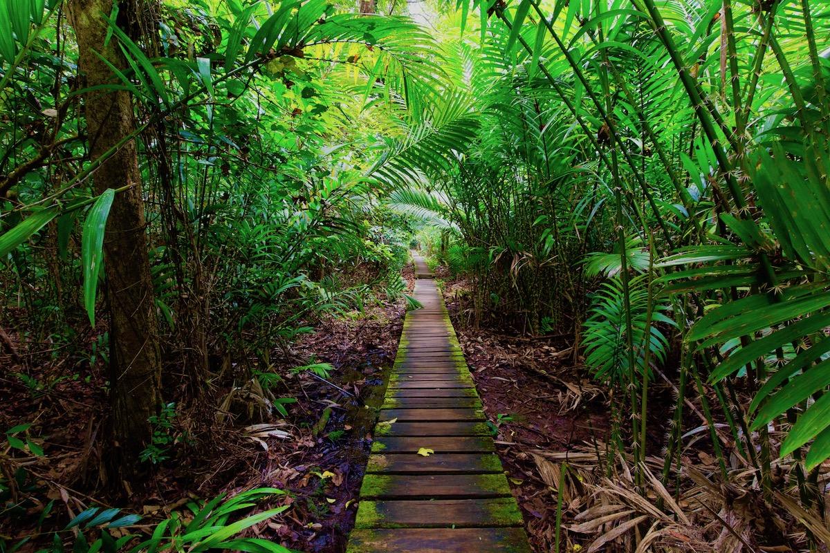 borneo_jungle_walkway_reduced.jpeg