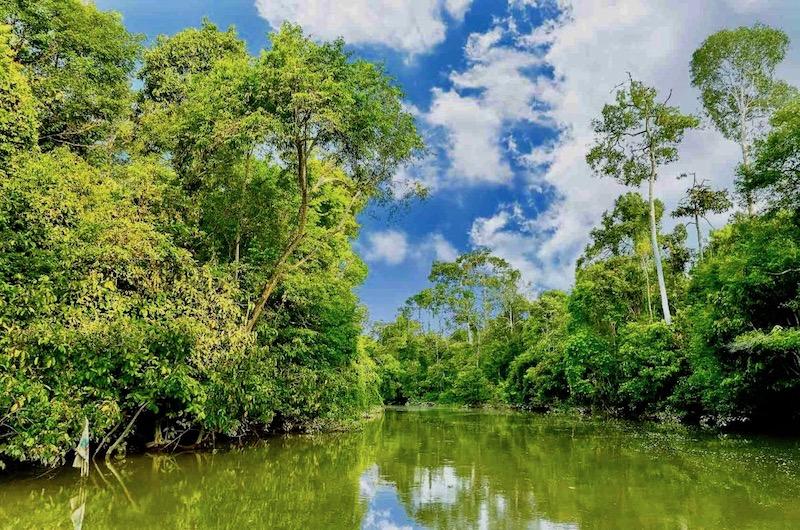 borneo-kinabatangan-river-1.jpg