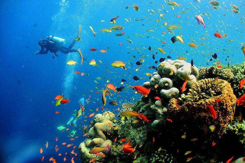 borneo-diving.jpg